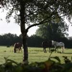 Fuchsia Lane Farm