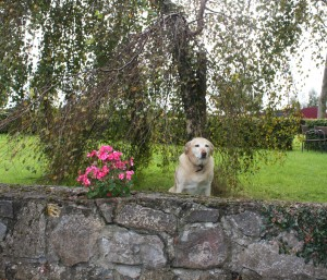 dog friendly self catering cottages